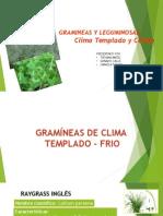 Gramineas y Leguminosas 2