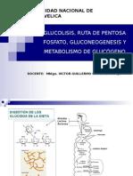 bioquimica GLUCOLISIS