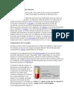 Anatomía-de-la-sangre-humana.docx