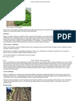 Rasađivanje i nega biljaka paprike NS SEME.pdf