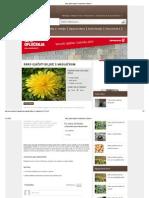 Kako Ojačati Biljke s Maslačkom _ Kako