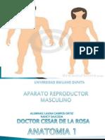 Aparato Reproductor Masculino y Femenino Clase