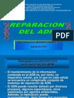 REPARACIÓN DE ADN