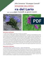 Flora Del Lario Abstract