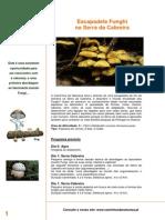 Cogumelos-Cabreira_set2012