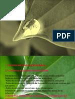 Como Se Defienden Las Plantas - Copia.ppt [Autoguardado]