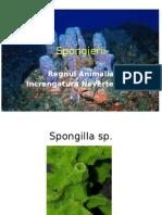Spongierii (2)