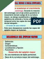 Embriología (Formación de intestinos)