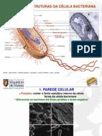 Estruturas_bacterianas