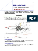 Anatomia Sistêmica - Sistema Nervoso