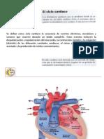 2 ciclo cardiaco