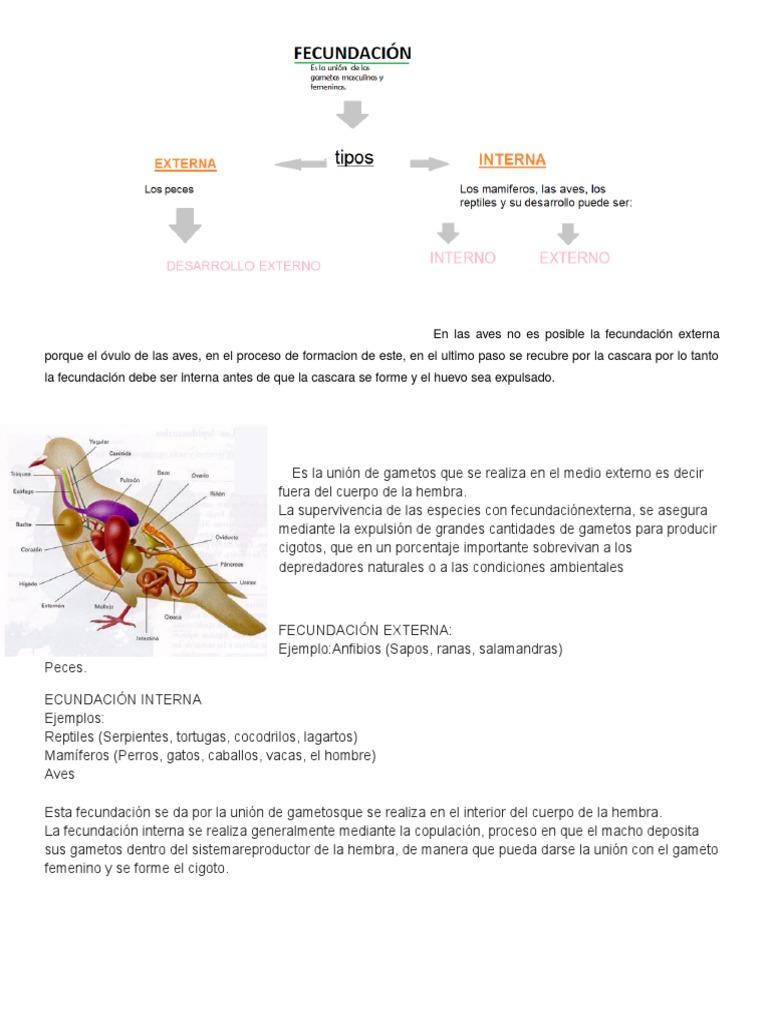 reproduccion de aves.docx