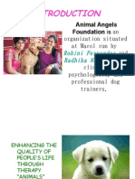 Animal Angel Foundation