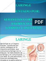 laringe-090511135206-phpapp02