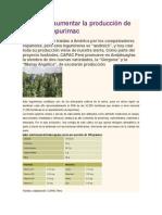 El Reto de Aumentar La Producción de Habas en Apurímac