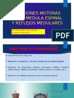 Funciones Motoras de La Medula Espinal y Reflejos