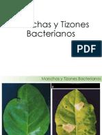 03 Manchas y Tizones Bacterianos
