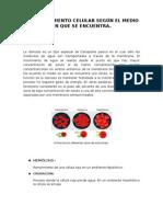 informe - observacion de celulas.docx