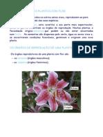 Reprodução plantas