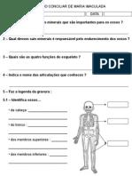 Esqueleto, Músculos, Pele
