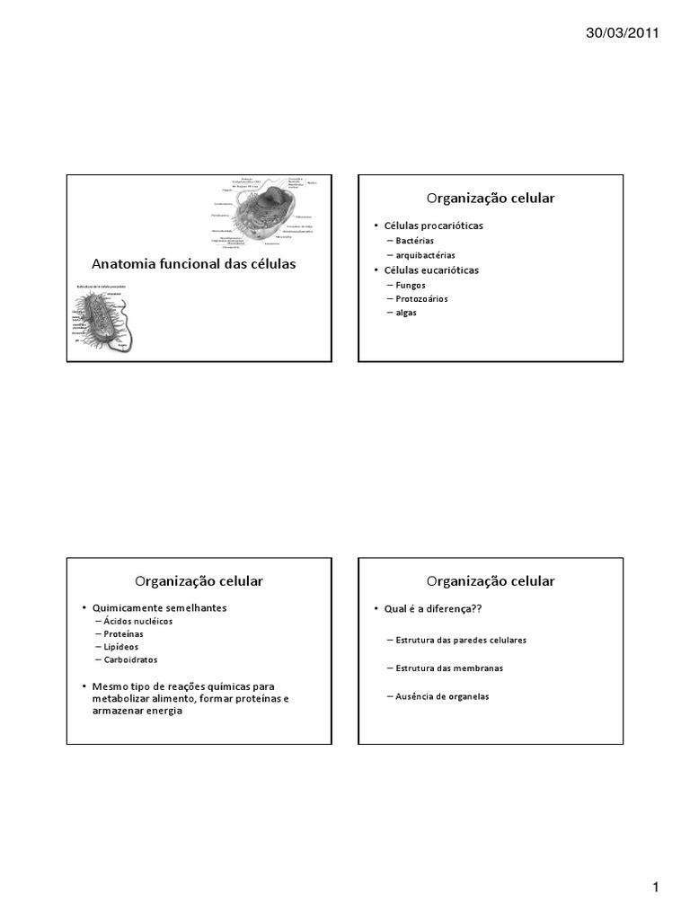 Anatomia Funcional Das Celulas Organelo Célula Biologia
