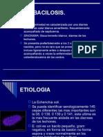 COLIBACILOSIS.2