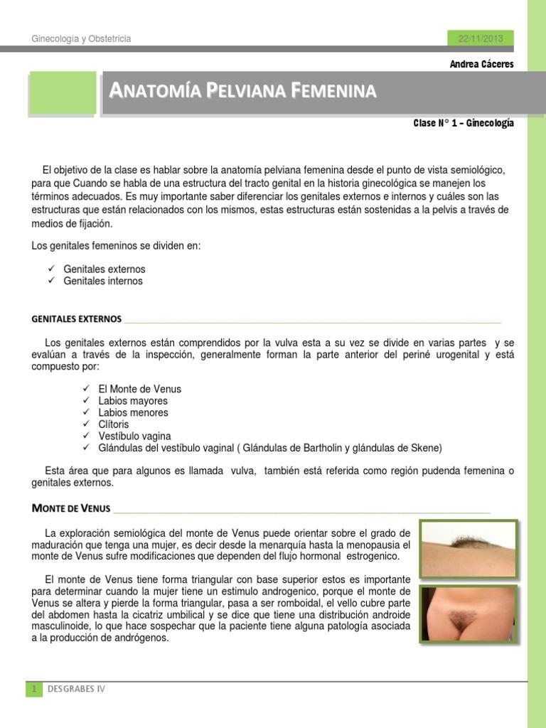 Clase 001 Ginecología - Anatomía Pelviana Femenina
