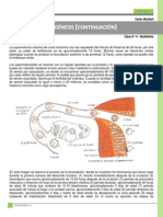 Clase 004 Obstetricia - Gametogénesis
