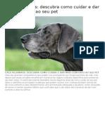 Cães Velhinhos - Descubra Como Cuidar
