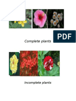 Complete Plants