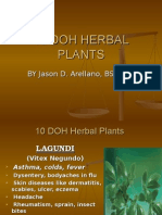 10 Doh Herbal Plants by Jason