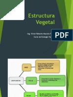 Presentacion Estructura Vegetal