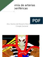 Anatomía de Arterias Periféricas Miembro Superior