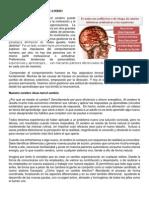 La Neurociencia Del Cambio