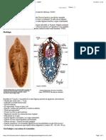 Fasciolosis o Fasciolasis - Recursos en Parasitología - Unam (Checked)