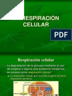 Respiración Celular 1