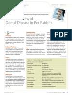 Dental Disease Rabbits
