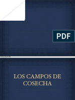 Los Campos de Cosecha