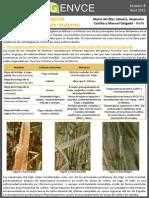 Enfermedades Fungicas Foliares en Cereal de Invierno