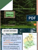 Rezervația Naturală Tinovul Mare
