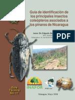 guia de insectos pdf
