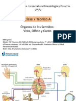 Anatomía Clase 7 A