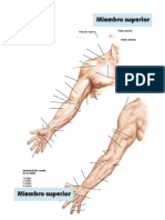 Imagenes Anatomicas