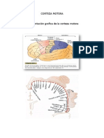 Neurofisiologia Resumen de Áreas Motoras
