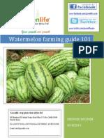 Melon Farming Guide