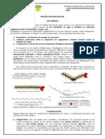 Guia Biologia I Medio. Moleculas Organicas (Parte 2)