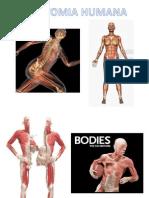 anatomiahumana-140406050508-phpapp01