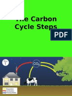 The Carbon Cycle Steps