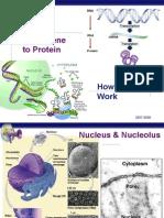 genetoprotein foglia