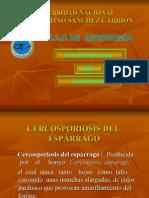 Cercosporiosis Del Espárrago